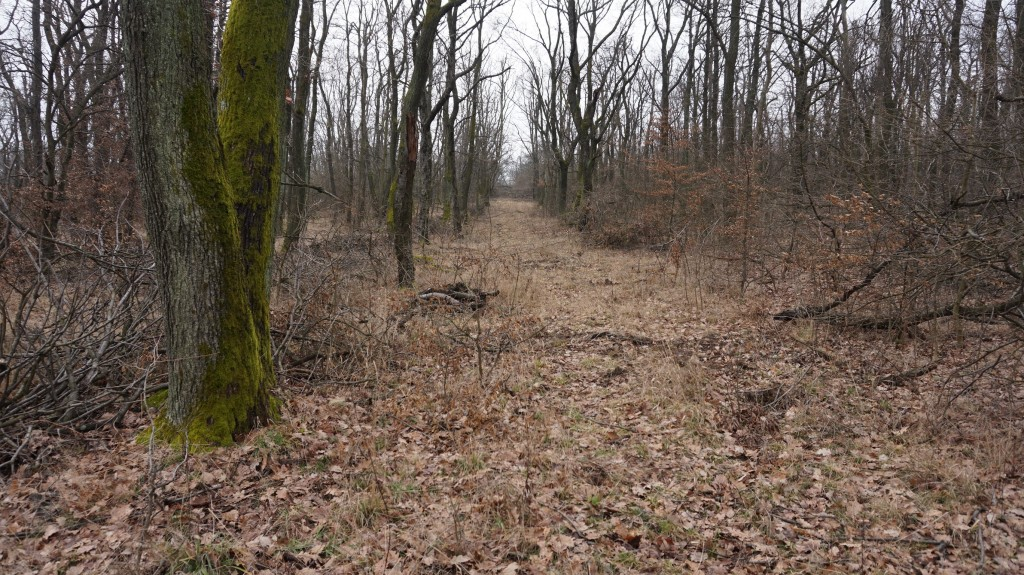 Téli erdő nyiladéka